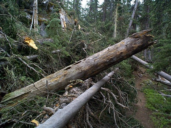 More fallen trees over the trail.