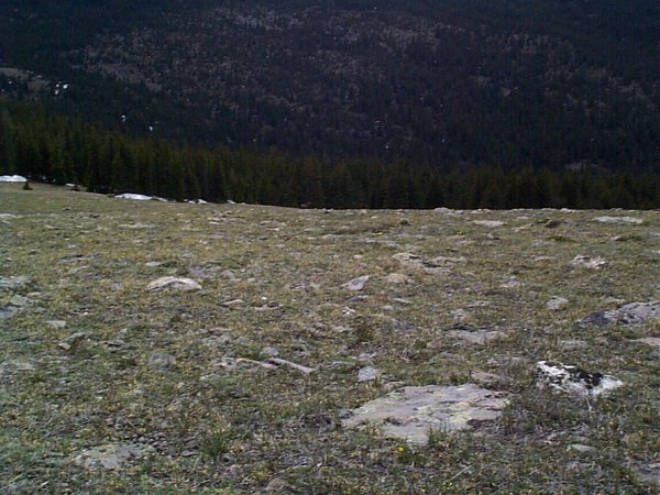 Can you see the two bull elk (center and center left) in this photo?
