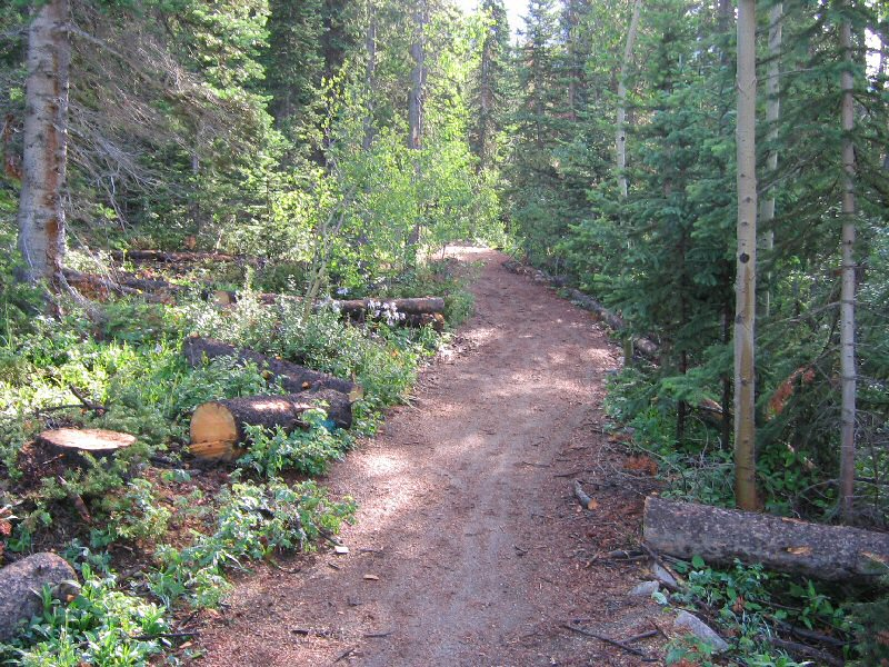 The trail starts out through a firewood cutting area.  I suspect this is related to the Pine Beetle outbreak in the area.