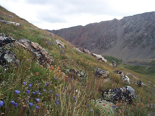 I had to get at least one wild flower photo - plus this image shows the slope I had to climb to get to the summit of Kelso Mountain.