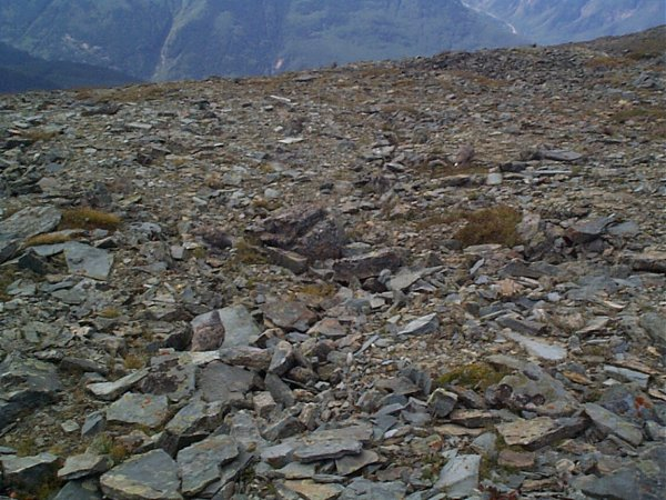 Can you find all three Ptarmigan in this photo?