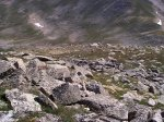 I swear that there are at least three Ptarmigan which may be visible in the larger image.  You might be able to locate one of them in the center of the photo.