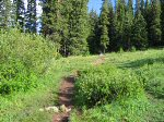About three quarters of a mile into the hike, the trail passed through this short meadow.
